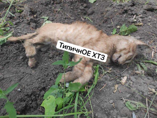 В Харькове мужчина с пятого этажа выбросил котенка