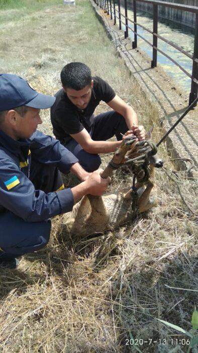 Под Харьковом в резервуар дамбы упала косуля