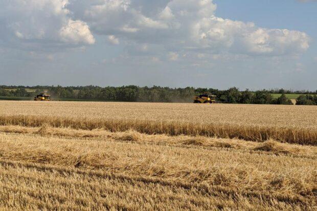 На Харьковщине собрали 2,5 млн тонн ранних зерновых