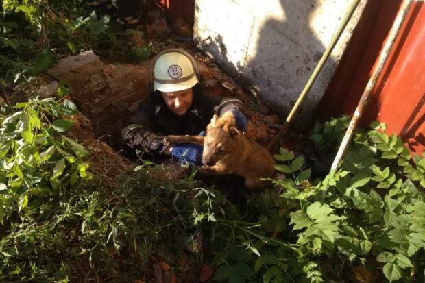 В Харьковской области спасатели достали из кирпичного колодца щенка