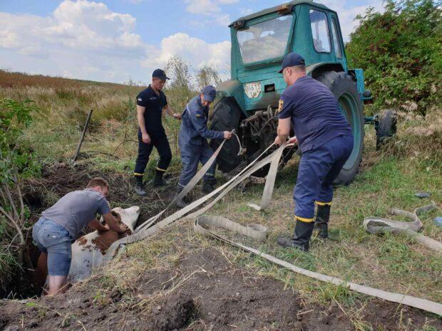 Под Харьковом спасатели помогли достать из заброшенного колодца корову