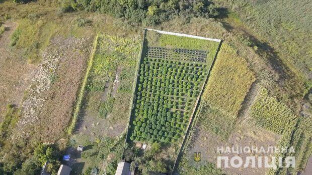 В Харьковской области двое мужчина на приусадебном участке выращивали 320 кустов конопли
