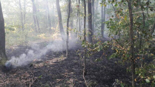 В Харьковском районе пожарные спасли лес от огня