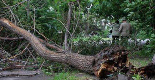 В Харькове из-за непогоды упало семь деревьев