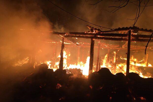 В Харьковской области в результате пожара в сарае сгорело 50 свиней