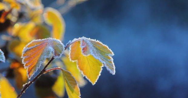 В выходные в Харькове - до 2 градусов тепла и небольшой мокрый снег