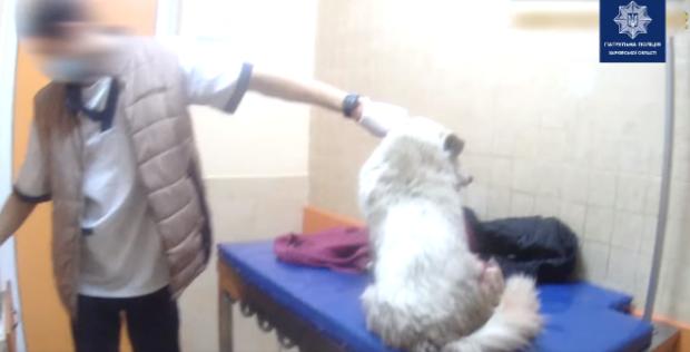 В Харькове патрульные помогли отвезти в ветклинику собаку, которую сбил автомобиль