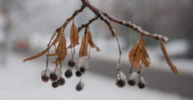 Завтра в Харькове - до 5 градусов мороза