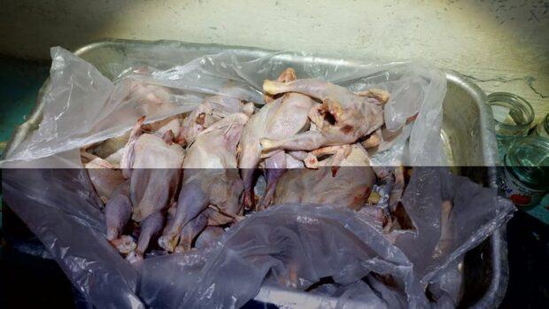 """В школы Купянска завезли курятину """"синего цвета"""""""