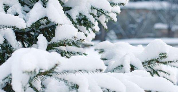 Завтра в Харькове - до 9 градусов мороза