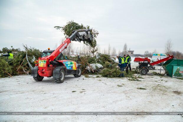 В Харькове утилизируют новогодние елки