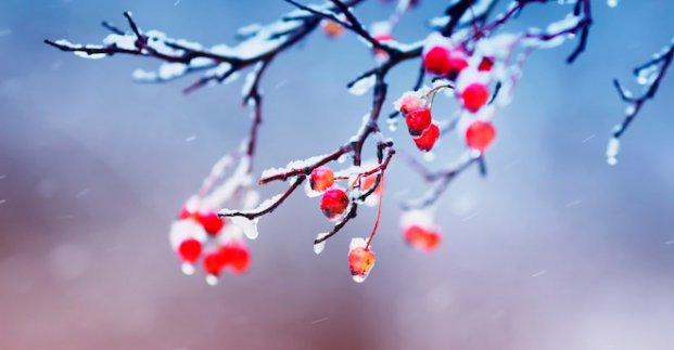 Завтра в Харькове - до 10 градусов мороза