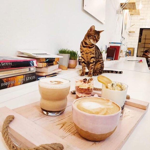 Кафе с котами в Харькове