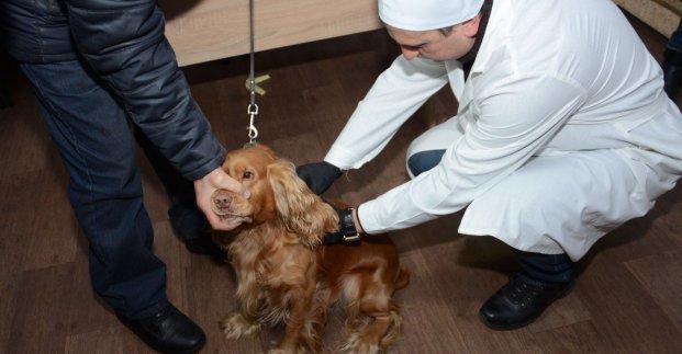 В Харькове начинается плановая вакцинация домашних животных от бешенства