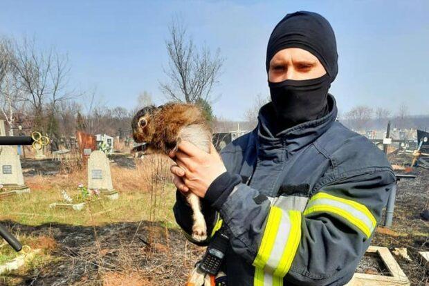 В Харькове при ликвидации очередного пожара сухостоя спасатели спасли зайчонка