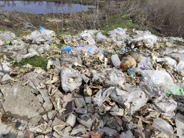 Под Харьковом нашли два могильника с остатками животных
