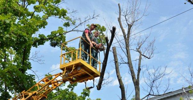 В Холодногорском районе проводят обрезку деревьев