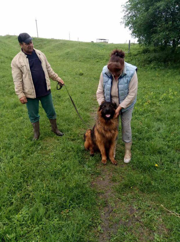 На Харьковщине хозяева нашли своего пса, которого украли три года назад