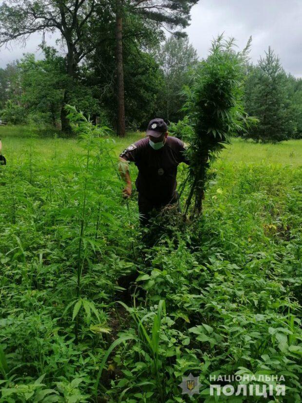 На Харьковщине у женщины на участке нашли 145 кустов конопли