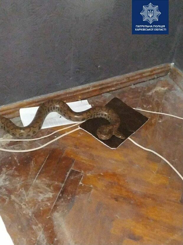 Харьковчанка нашла под своей кроватью питона: полицейские отвезли змею в зоопарк