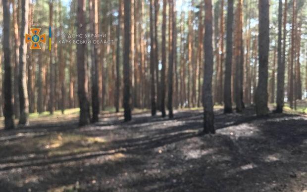 В Безлюдовке загорелся лес