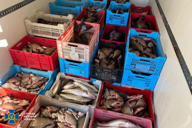 В Харьковской области СБУ заблокировала схему нелегального рыбного промысла