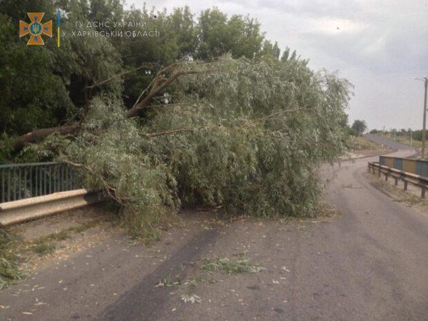 В Харьковской области спасатели убрали поваленные в результате сильного ветра деревья
