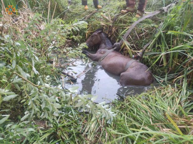 В Харьковской области спасатели вытащили коня из ямы
