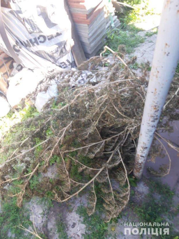 Под Харьковом у мужчины во дворе нашли 127 кустов конопли