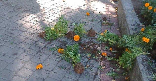В сквере «Театральный» утром вырвали цветы