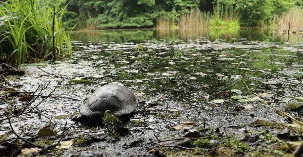 Сотрудники зоопарка выпустили в дикую природу болотных черепах