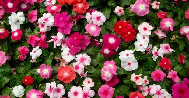 В харьковских скверах высаживают цветы