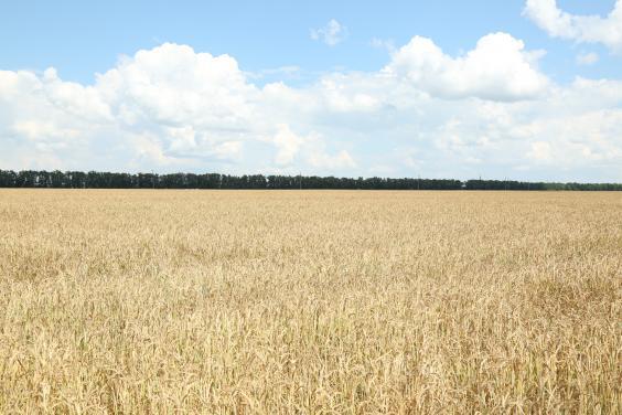 Харьковская область - в лидерах по площади земель, по которым заключены сделки