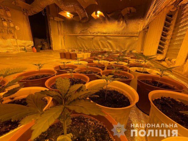 В Харькове вьетнамец обустроил нарколабораторию, где выращивал коноплю элитных сортов
