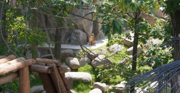 В Харьковском горсовете рассказали, как будет организовано посещение зоопарка