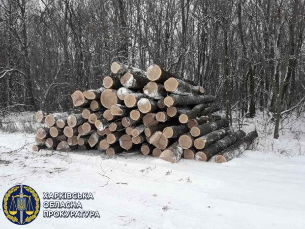 В Харьковской области будут судить «черных лесорубов» во главе с депутатом городского совета