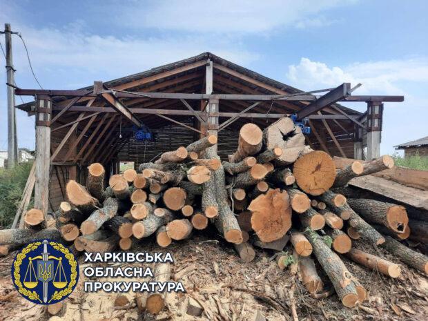 В Харьковской области бывшему директору лесного хозяйства сообщили о подозрении в незаконной вырубке деревьев