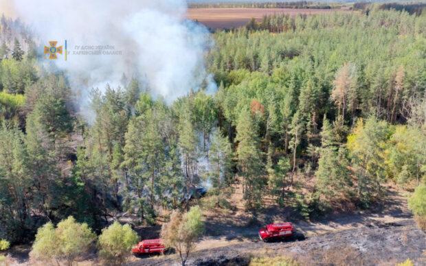 На Харьковщине в лесном масиве произошел пожар