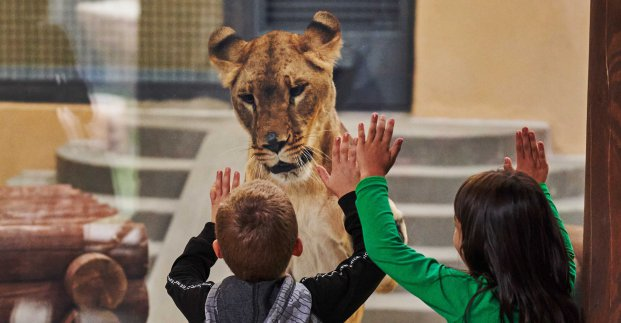 Нельзя перелезать через барьеры, залезать на ограждения, ставить туда детей: харьковчан просят соблюдать правила посещения зоопарка