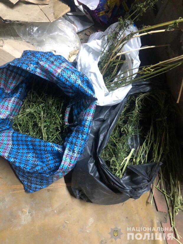 Харьковчанин в собственном дворе выращивал коноплю