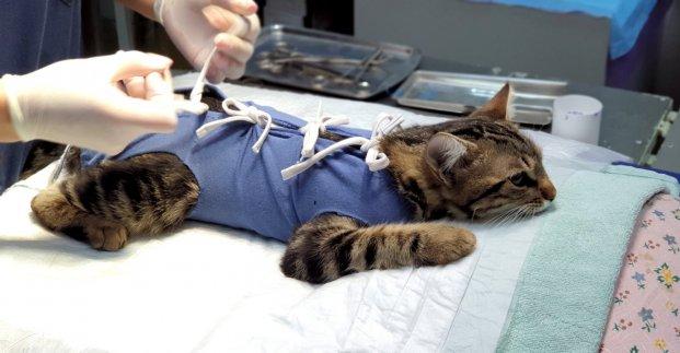 В Харькове начали проводить бесплатную стерилизацию домашних животных