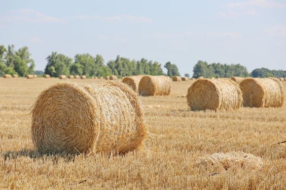 Аграрии Харьковщины собрали более 3,5 млн тонн зерна