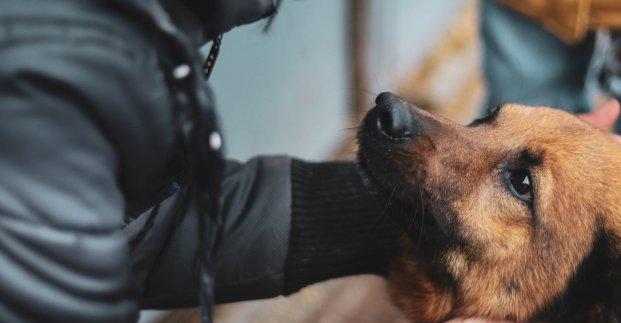 В Харькове появились опекуны над бездомными животными