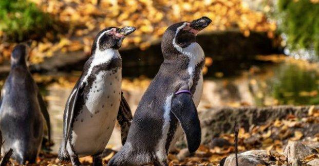 В Харьковский зоопарк прибыли пингвины